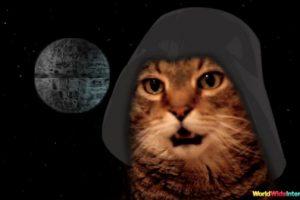 cat-chat-star-wars-theme