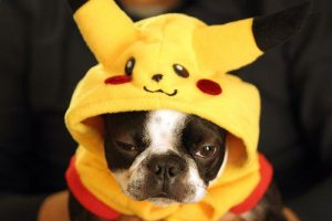 cosplay-dog-pikachu-chien-costume (1)