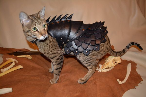 cat-battle-armo-armure-chat-2 [600 x 400]