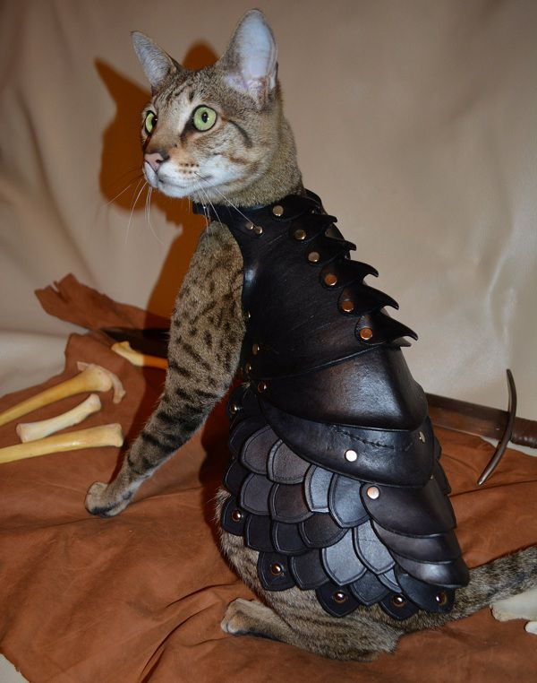cat-battle-armo-armure-chat-3 [600 x 762]