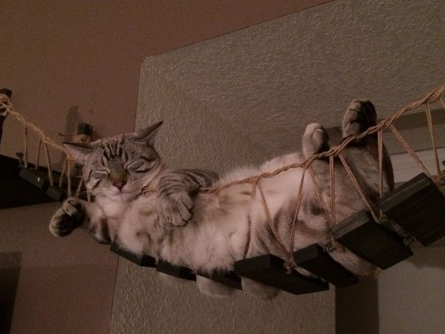 cat-chat-bridge-pont-indiana-jones (2)