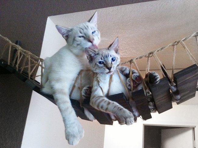 cat-chat-bridge-pont-indiana-jones (3)
