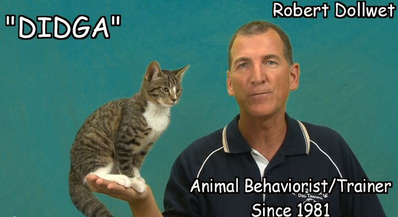 Didga-cat-robert-dollwet [800 x 437]
