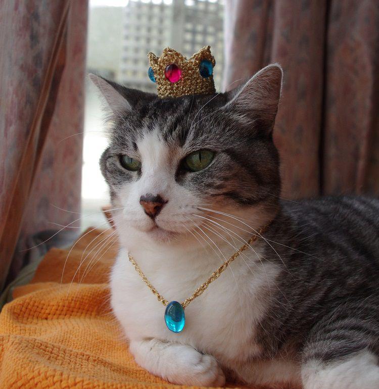 chapeau-chat-nintendo-princesse-peach [750 x 770]