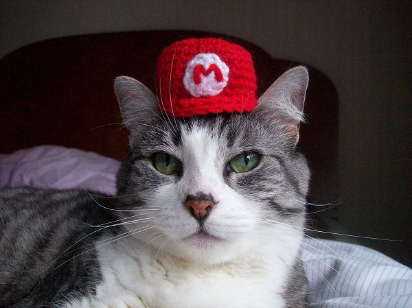 chapeau-mario-chat-geek (1)