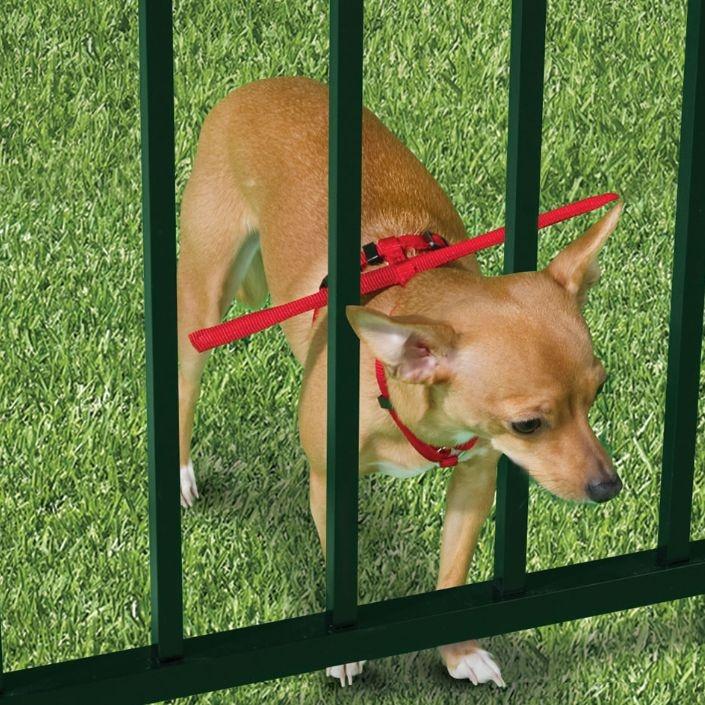 Escape-preventig-dog