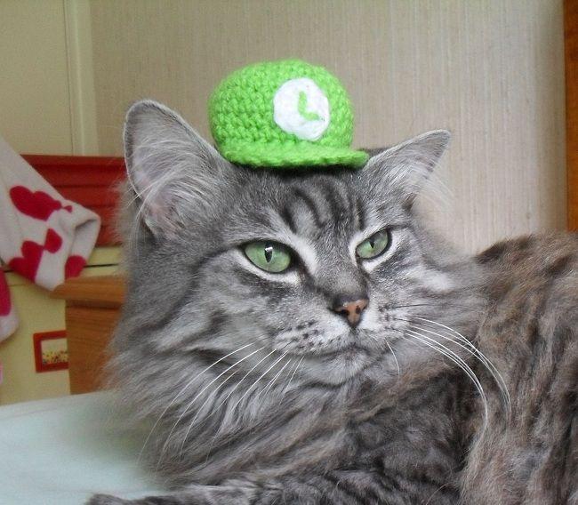 cat-hat-chapeau-luigi-1 [650 x 568]