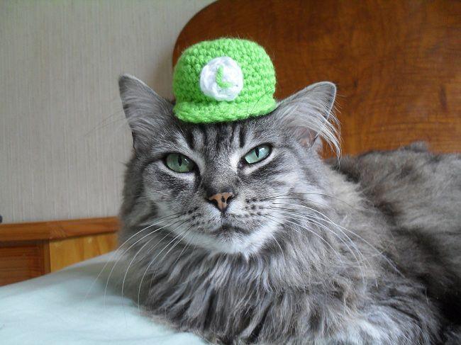 cat-hat-chapeau-luigi-2 [650 x 487]