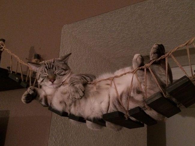 cat-chat-bridge-pont-indiana-jones (2)